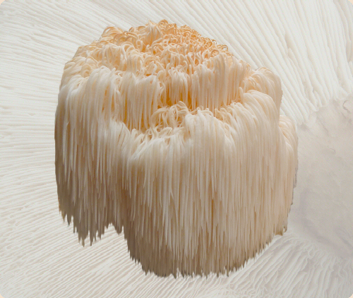 Dried Organic Lion's Mane