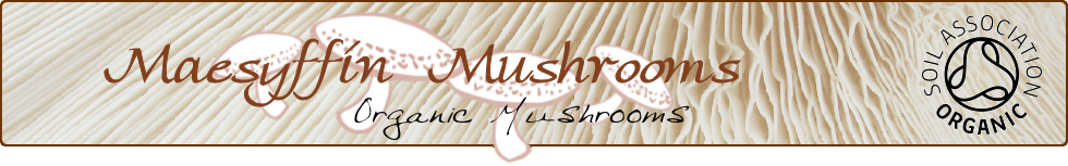 Maesyffin Mushrooms - growers of award-winning Organic Shiitake Mushrooms